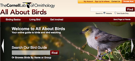 All About Birds: Free Bird Guide and More